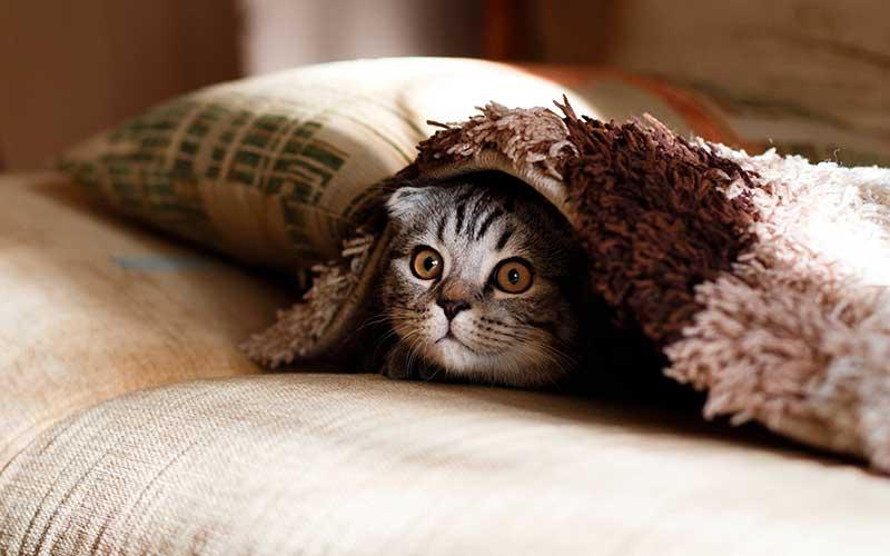 comment gérer la litière de son chat