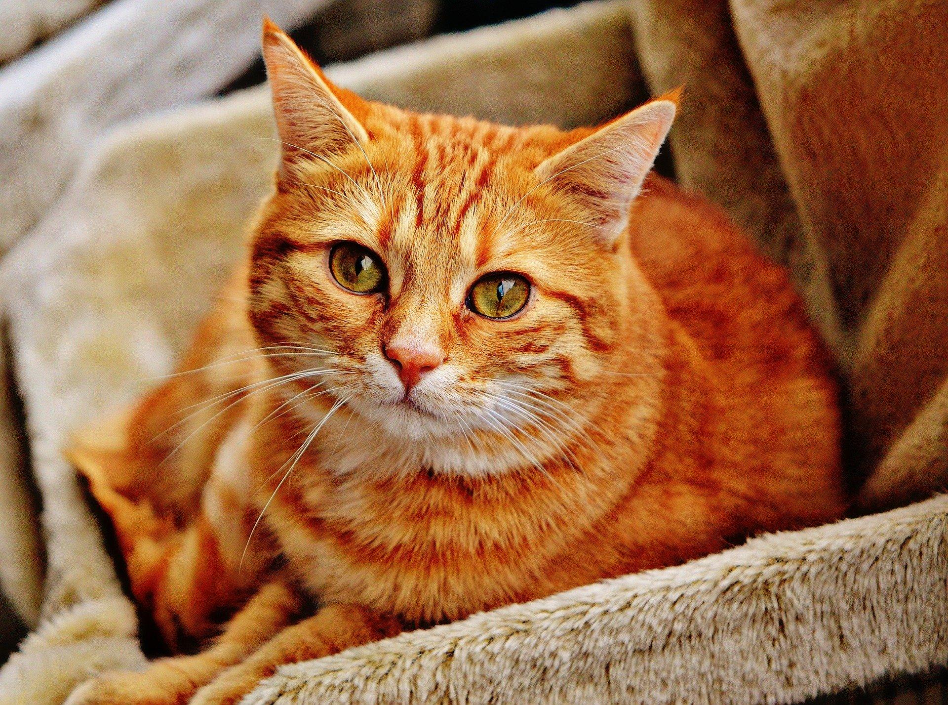 Comment choisir la bonne litière design pour son chat ?
